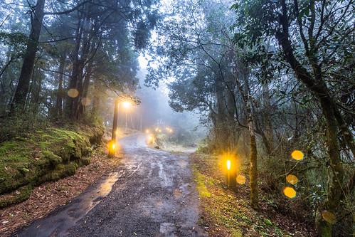 longexposure light color horizontal sunrise canon day taiwan trail rainy chiayi 阿里山 alisan 1635mm 阿里山森林遊樂區 canoneos5dmarkiii canon5dmarkiii