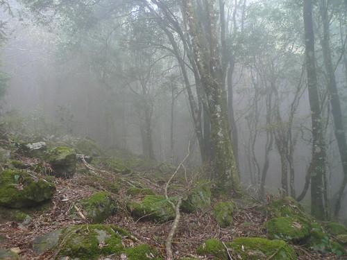20140322-馬崙山 (302)