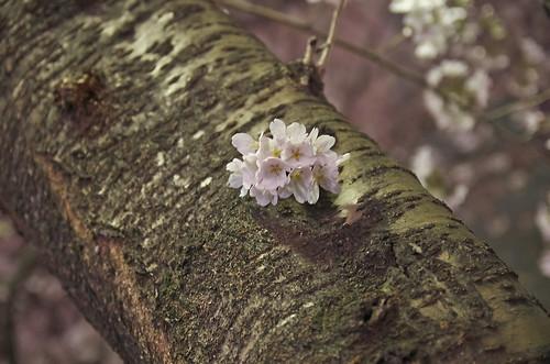 【写真】2014 桜 : 木屋町通/2021-09-17/IMGP5611