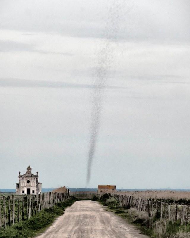 Un tornado ......¡de bichos!