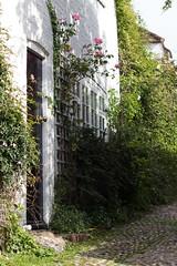 House Rose door