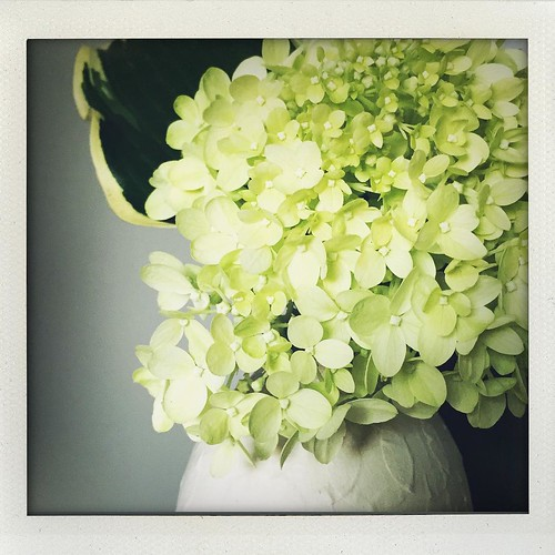hosta & hydrangea from our yard & vase by @abigailmurraystudio