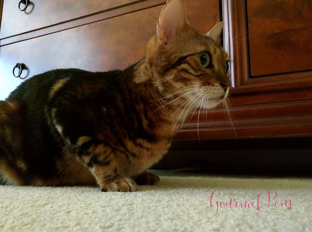 Whiskers & Paws December 2016 Edition (6)