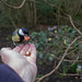 Day 49/366 A bird in the hand..... by Eiona R.
