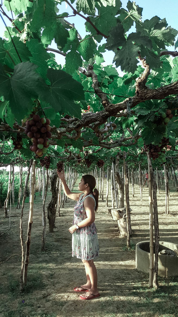 la union grape farm 4 (1 of 1)