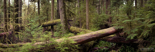 cathedralgrove green landscape panorama tree vacation vancouverisland britishcolumbia canada ca