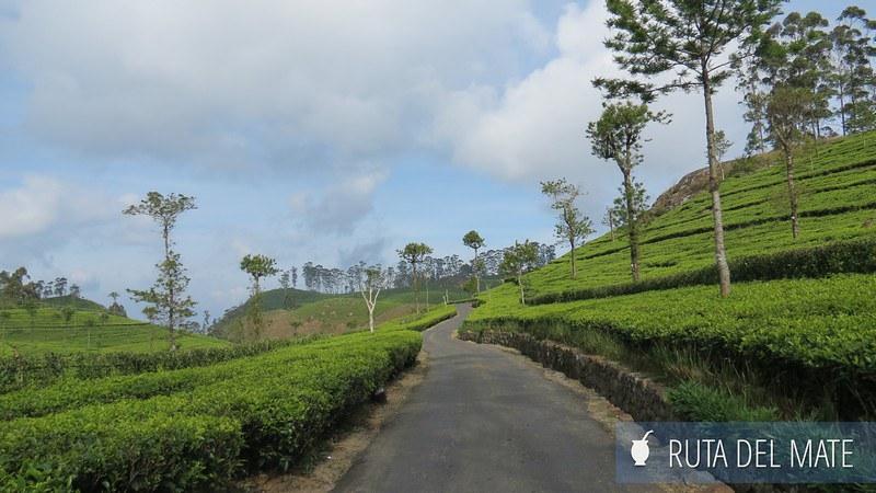 Haputale Sri Lanka (23)