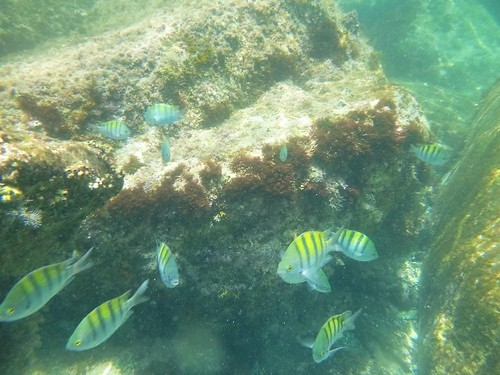 Snorkeling at Parque Nacional Bahia Loreto, Mexico