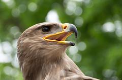 eagle-29679
