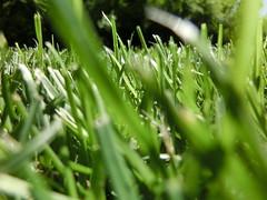 Grass / Gras