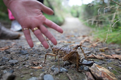 Would the Giant Weta please give way to the pedestrians