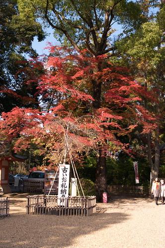 【写真】2012 紅葉 : 長岡天満宮/2020-10-09/IMGP6541