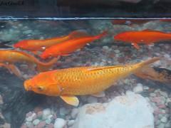 Fish Aquarium,  Goa