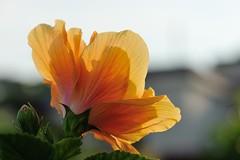 Flowers on the sunshine