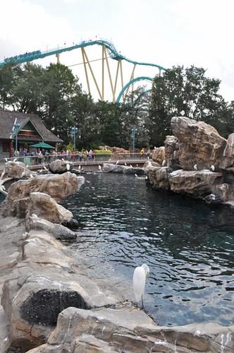 parques de atracciones de Estados Unidos: SeaWorld Orlando mezcla naturaleza y diversión parques de atracciones de estados unidos - 9475282574 6f3c66394a - Los mejores parques de atracciones de Estados Unidos
