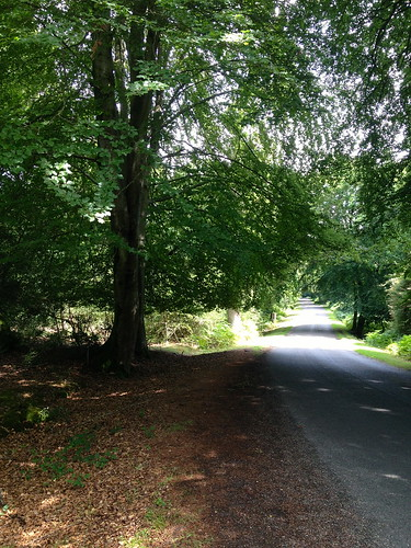 A New Forest road