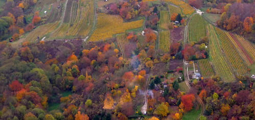 Vinyards and mixed forest from a hot air balloon by Ginas Pics