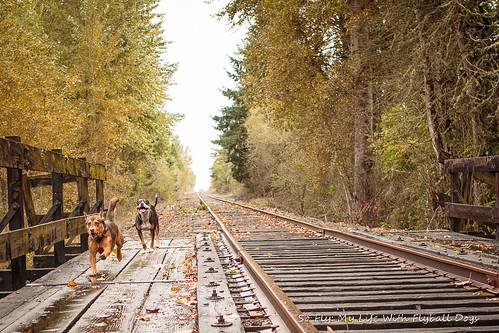 Train Tracks-9528