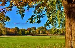 Central Park-North Meadow, 10.20.13