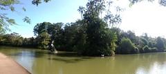 Swan lake at Botanic Gardens