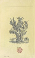 "British Library digitised image from page 40 of ""The Forest and Chace of Malvern, its Ancient & Present State; with notices of the most remarkable old trees remaining within its confines ... Reprinted from the Transactions of the Malvern Naturalists' Fiel"