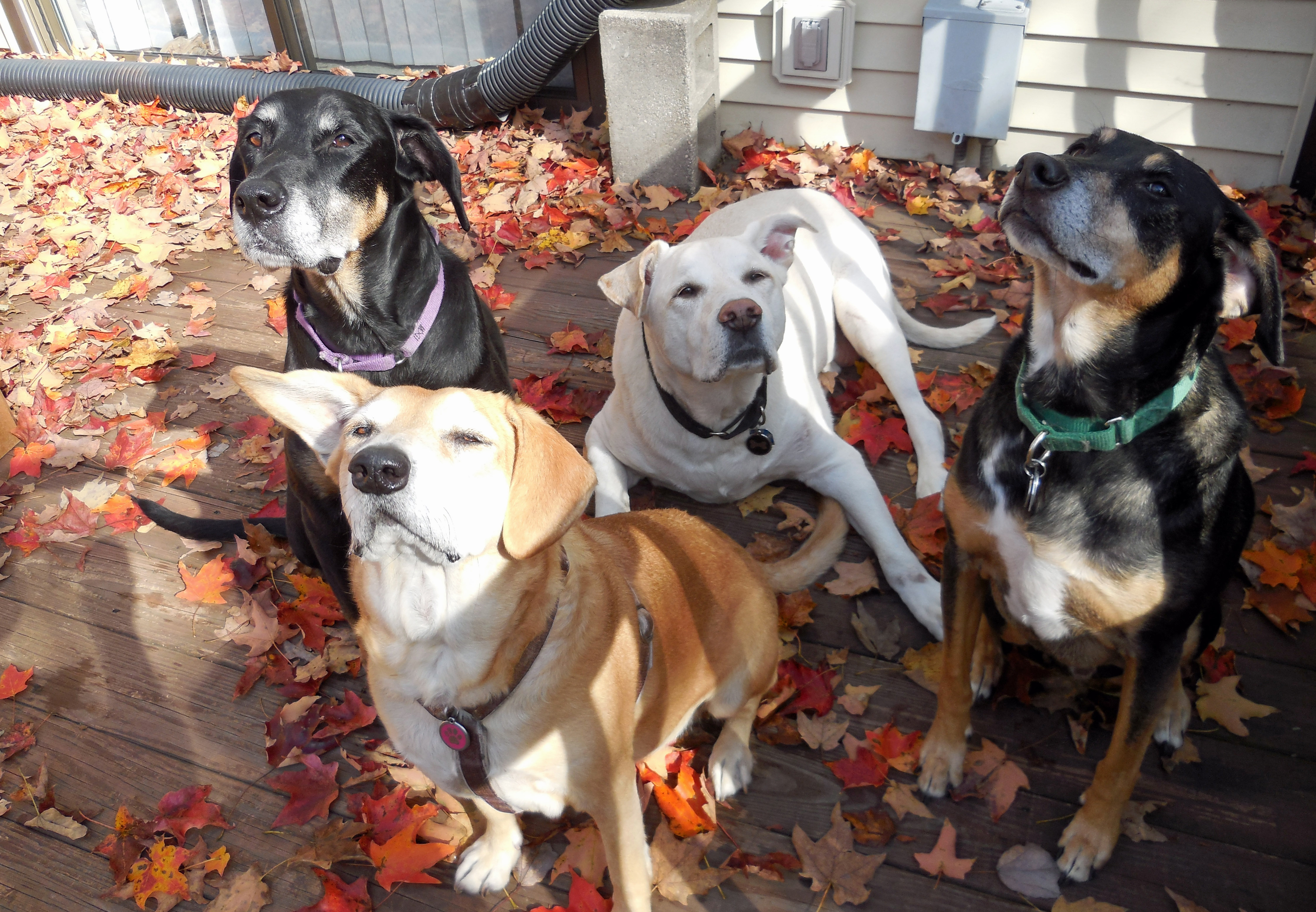 4dogs_101413g
