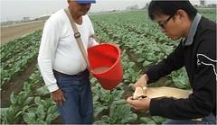日月光偷排廢水高雄市政府農業局進行農作物採樣送驗。(圖片來源:高雄市政府農業局)