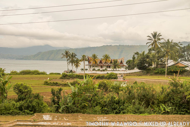 Indonesia - Medan - Samosir - Scenery - Paddy field and Hill