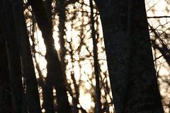 Filtre - Photo of Léry