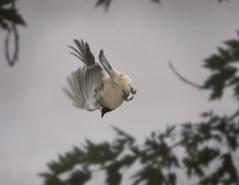 animal, perching bird, bird,