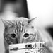 Caturday March 8th - Ilford HP5 by Mars Observer ♂