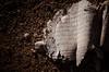 Faith on wasteland soil by Αλήθεια ...... ( Alicia G. )