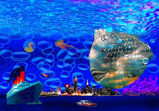 My New Fish Tank Flickr - Photo Sharing!