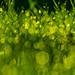 green magic by StillBelieven