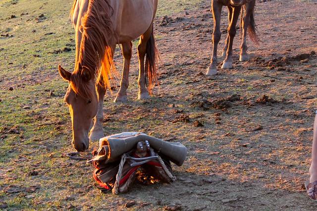 sunset horse1