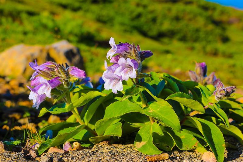 2014-07-20_00460_北海道登山旅行.jpg