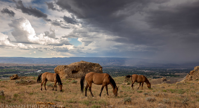 Wild Horses and a Storm