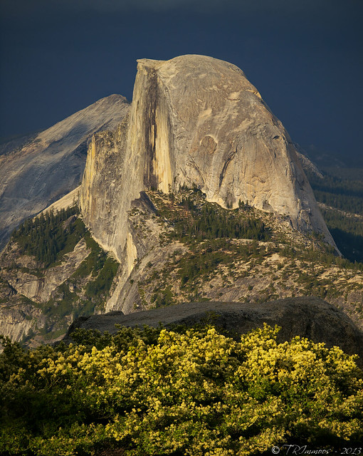 Half Dome and Spring Blossoms by Tony Immoos