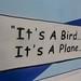 It's a Bird, it's a Plane....