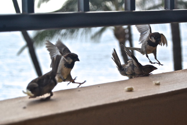 attack of the finches!