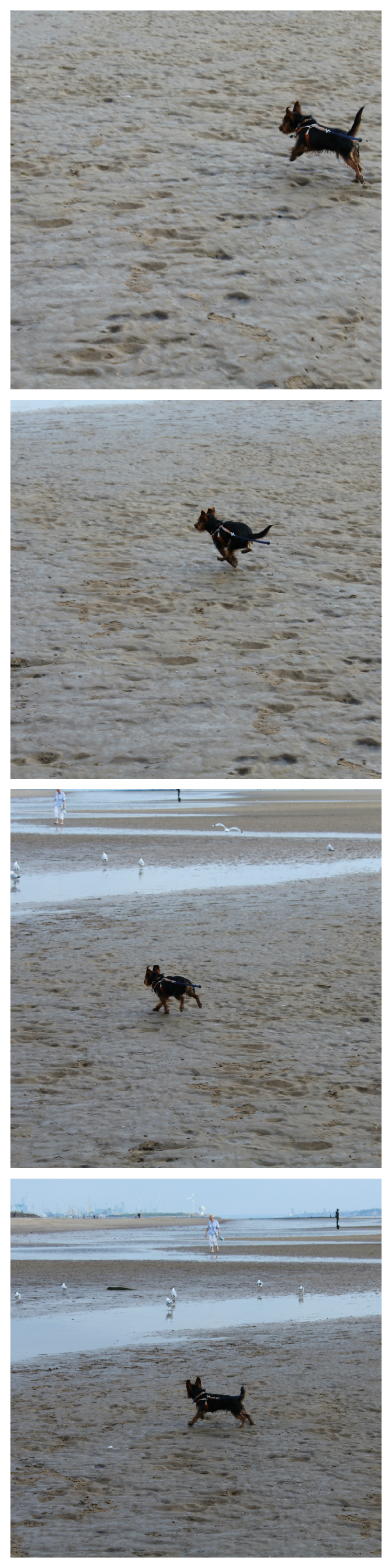 jarvis_running_on_the_beach