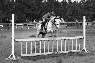 Horse Related B&W, ca. 1970