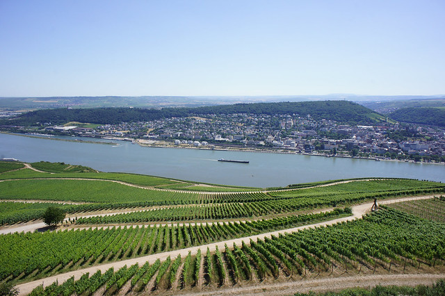 the river rhine case study The rhine river: lifeline of large cities in the basin a case study the rhine flows from the swiss mountains through austria, germany, france and luxembourg to.