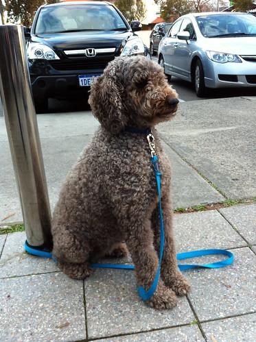 Obedient Dog at Boatshed