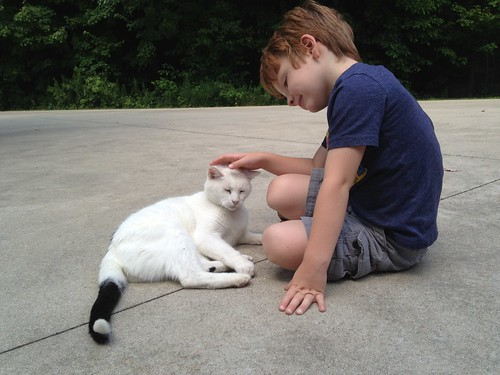 cat lover.