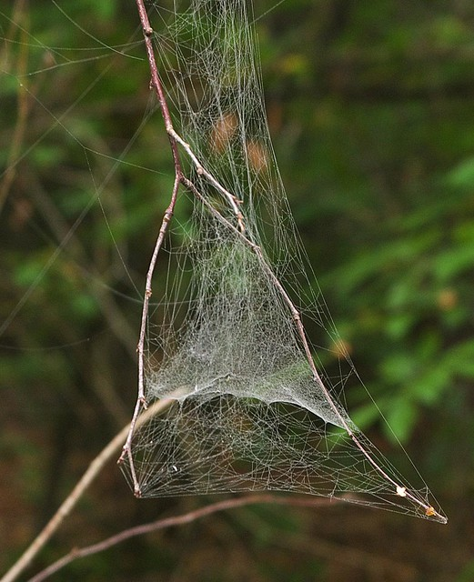 DSC_7237 spider web