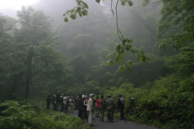 霧が出て来て,幻想的な森の風景に.参加者は鳥を待つ.