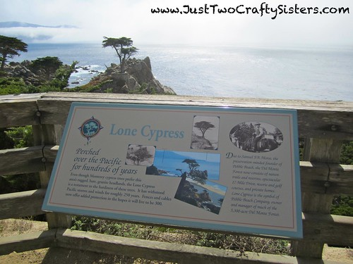17 Mile Drive Monterey- Lone Cypress