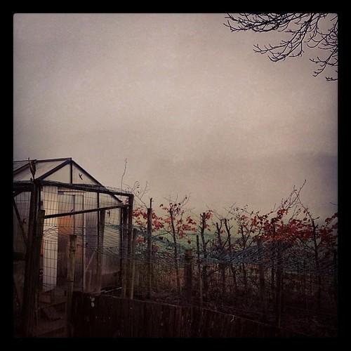 Beaucoup de brouillard se matin a Nivelet