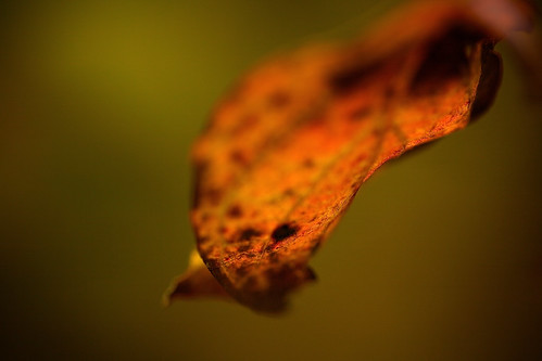 color detail macro green nature leaf glow different deep mellow